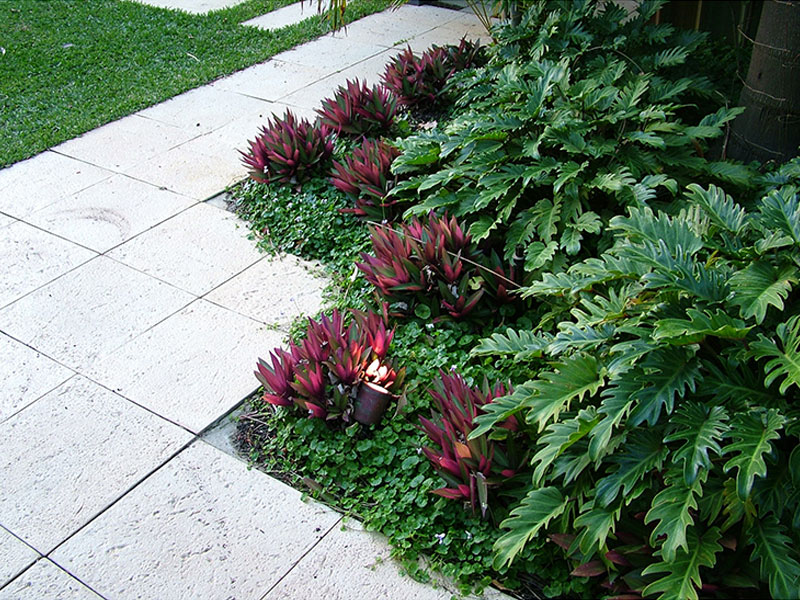 tropical garden design low planting for shade