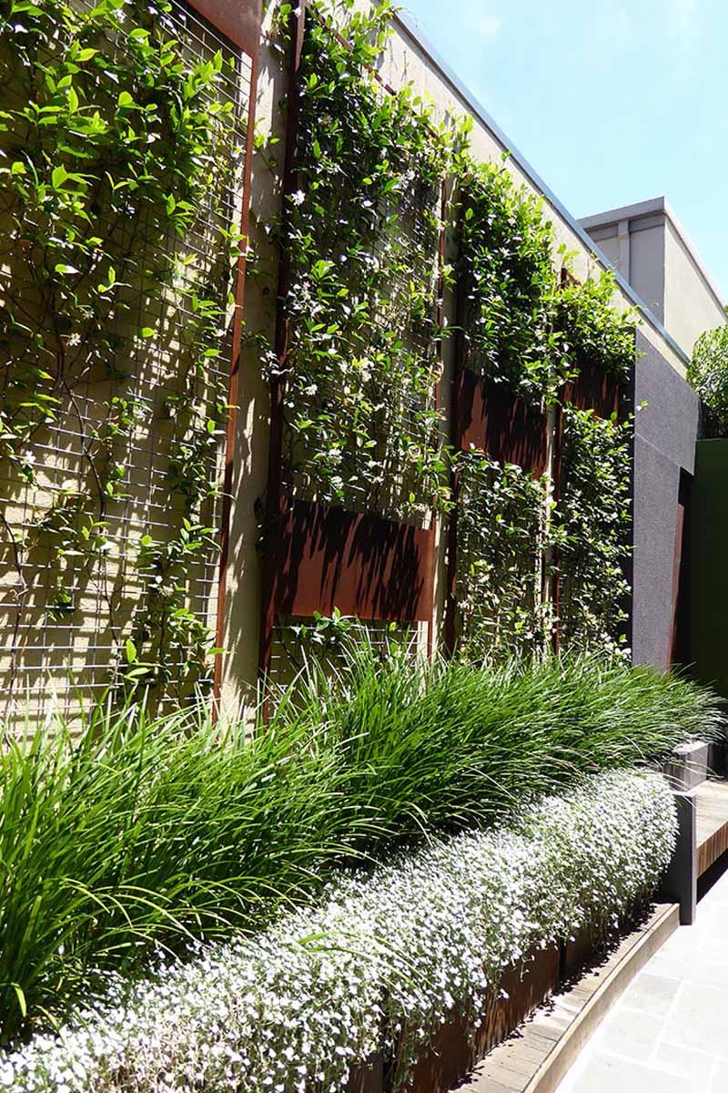 lush corten steel green wall designed by Cultivart in fremantle