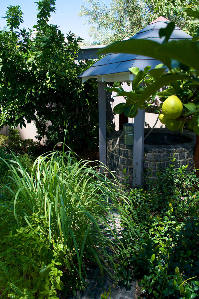 Fruit tree in lush garden with wishing well
