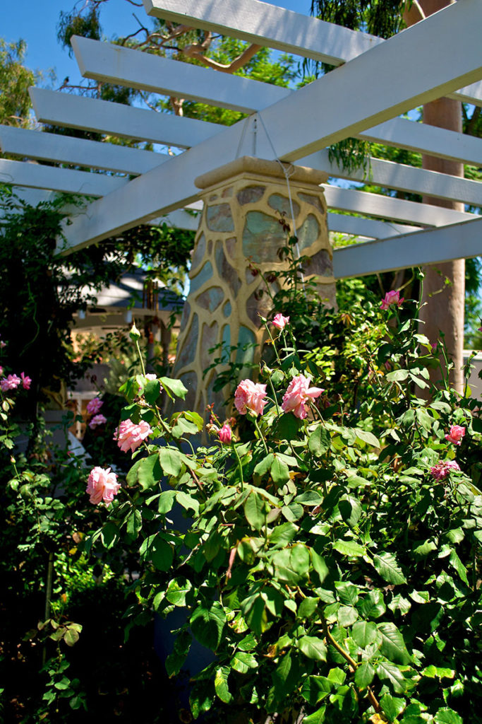 rose garden and arbour
