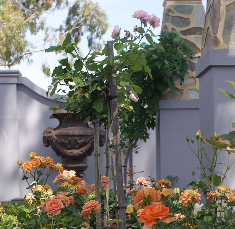 classic formal garden with orange roses and stone arbor