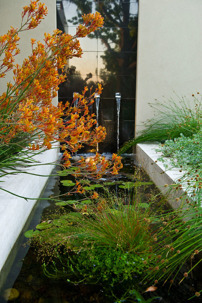 Creative water feature design with polished granite and australian native plants