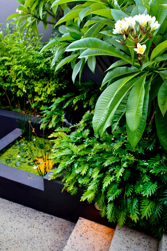 natural water feature with tropical garden over