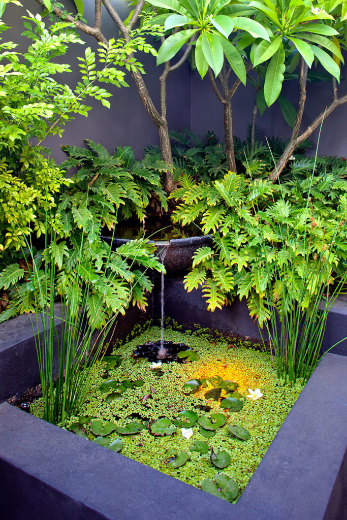 natural pond with tropical plants