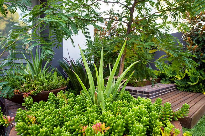 green entry garden with platform steps