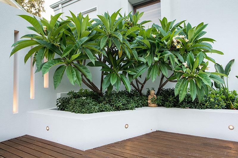 swanbourne landscape design by janine-mendel - cultivart